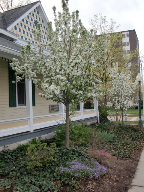 Grant Street Inn in Spring