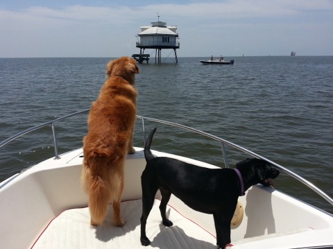 Dogs on the water.