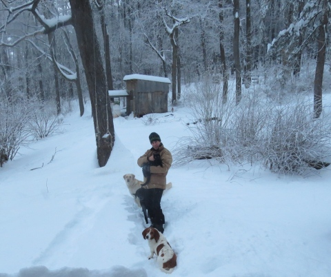 Snow, dogs, cats, and the chicken palace