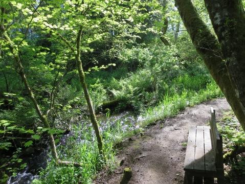 Creek loop in the late Spring