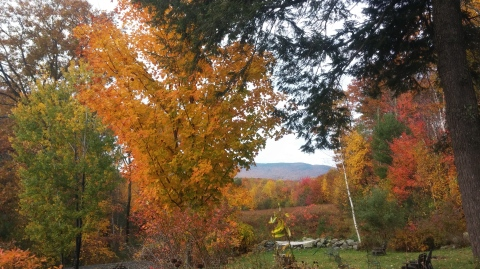 The leaves are peaking in NH