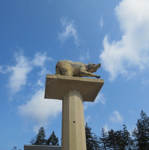 Bear in the Sky: UC Berkeley