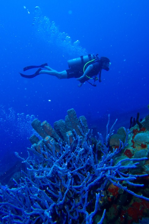 Underwater in St Croix