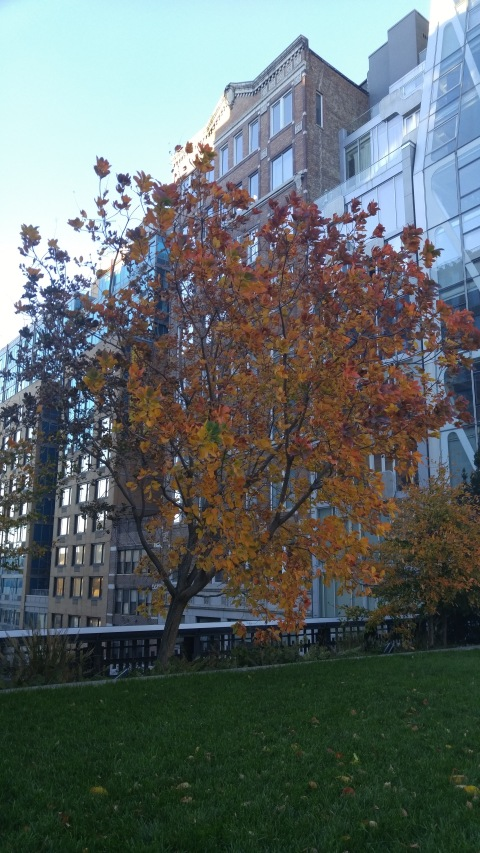 HIghline tree